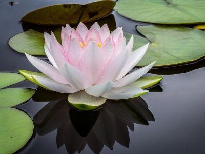 Meditation gør en forskel for dit sind